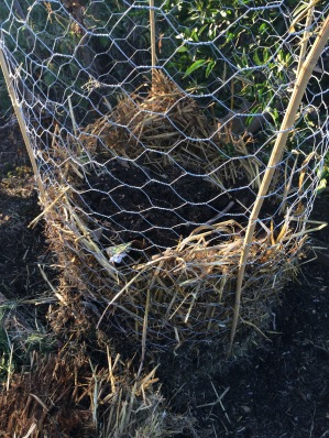 Wire basket with mulch base and rotten straw lining.
