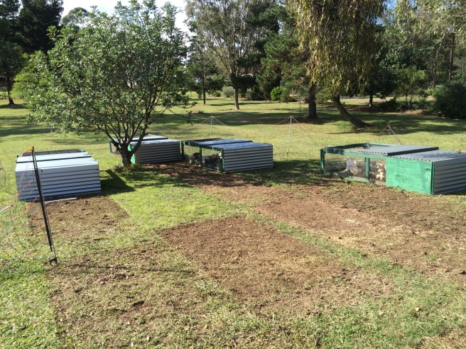 Behind the chicken tractors. Patches of cleared pasture.