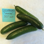 Lebanese Cucumbers 50 cents each